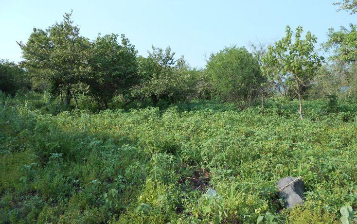 Foto de terreno habitacional en venta en campo denominado la leona 0, amatitlán, emiliano zapata, morelos, 1708558 no 01