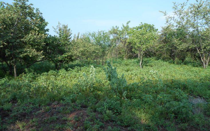 Foto de terreno habitacional en venta en campo denominado la leona 0, amatitlán, emiliano zapata, morelos, 1708558 no 02