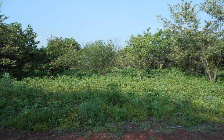 Foto de terreno habitacional en venta en campo denominado la leona 0, amatitlán, emiliano zapata, morelos, 1708558 no 03