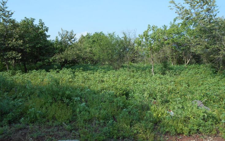 Foto de terreno habitacional en venta en campo denominado la leona 0, amatitlán, emiliano zapata, morelos, 1708558 no 05
