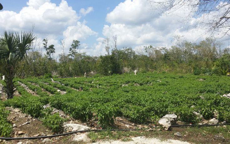 Foto de terreno habitacional en venta en, cancún internacional de cancún, benito juárez, quintana roo, 1055959 no 03