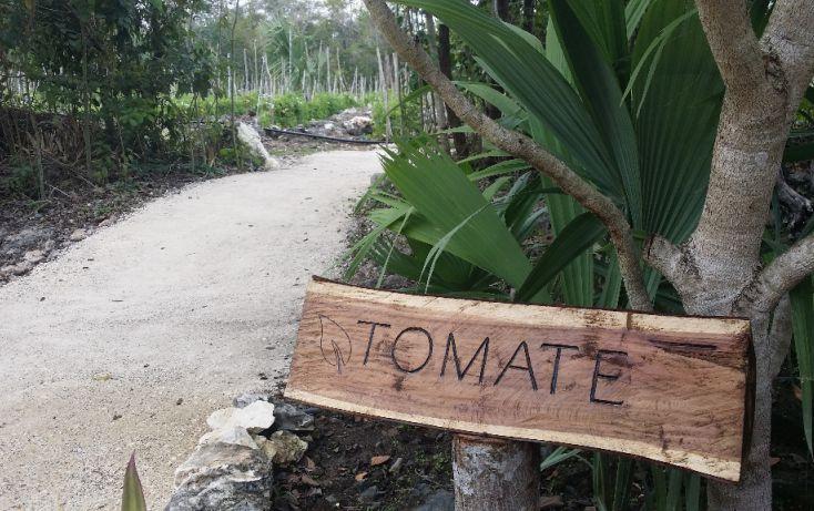 Foto de terreno habitacional en venta en, cancún internacional de cancún, benito juárez, quintana roo, 1055959 no 09