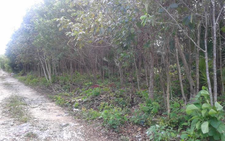 Foto de terreno habitacional en venta en  , cancún (internacional de cancún), benito juárez, quintana roo, 1271649 No. 02