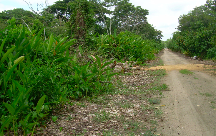 Foto de terreno comercial en venta en  , cárdenas centro, cárdenas, tabasco, 1090861 No. 02