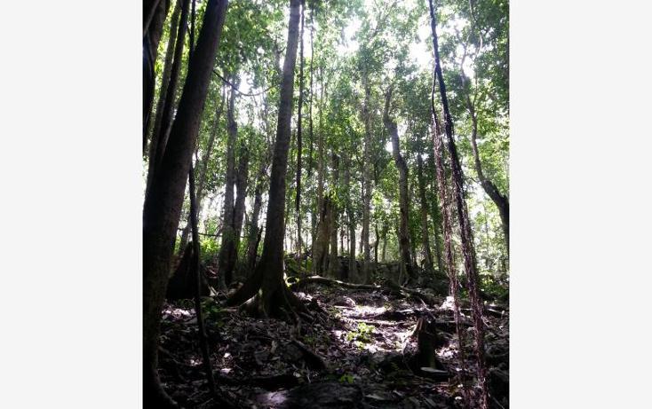 Foto de terreno comercial en venta en carretera 307 8kms, akumal, tulum, quintana roo, 2677900 No. 13