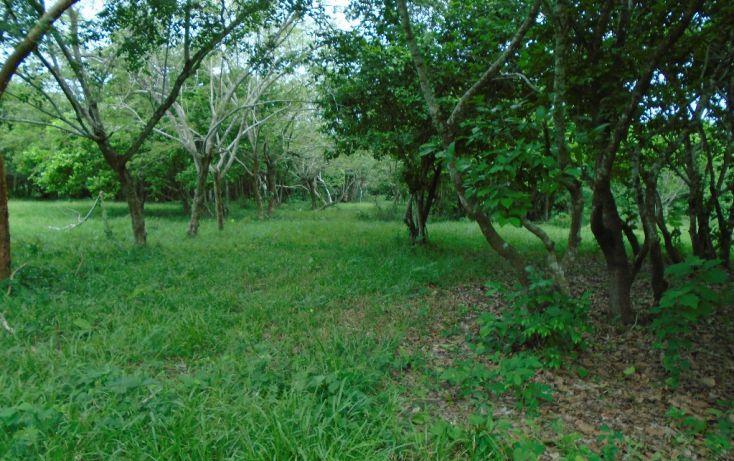 Foto de rancho en venta en carretera a tantoyuca, tantoyuca, tantoyuca, veracruz, 1721044 no 08