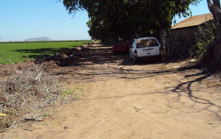 Foto de terreno habitacional en venta en carretera mochis ahome atras de casa corona construrama, primer cuadro, ahome, sinaloa, 1717192 no 06