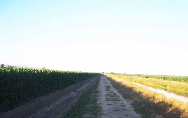 Foto de terreno habitacional en venta en  , bajada de san miguel, ahome, sinaloa, 1768483 No. 04