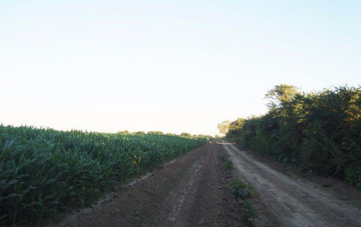 Foto de terreno habitacional en venta en carretera mochis ahome atras panteon san angel, bajada de san miguel, ahome, sinaloa, 1768483 no 05