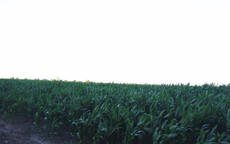 Foto de terreno habitacional en venta en carretera mochis ahome atras panteon san angel, bajada de san miguel, ahome, sinaloa, 1768483 no 07
