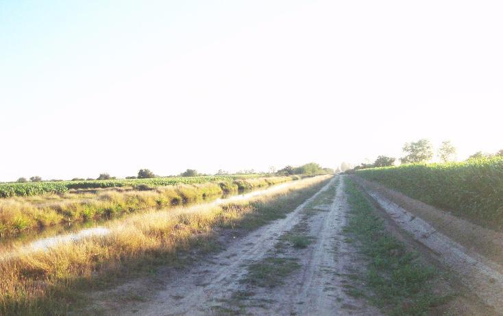 Foto de terreno habitacional en venta en  , bajada de san miguel, ahome, sinaloa, 1768483 No. 08