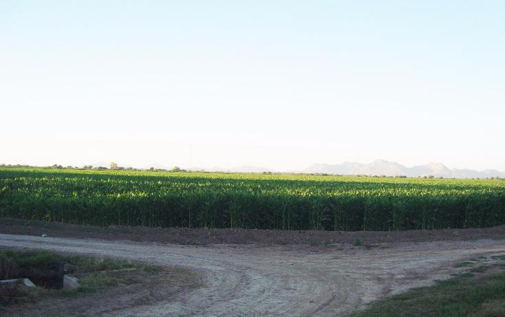Foto de terreno habitacional en venta en  , bajada de san miguel, ahome, sinaloa, 1768483 No. 16