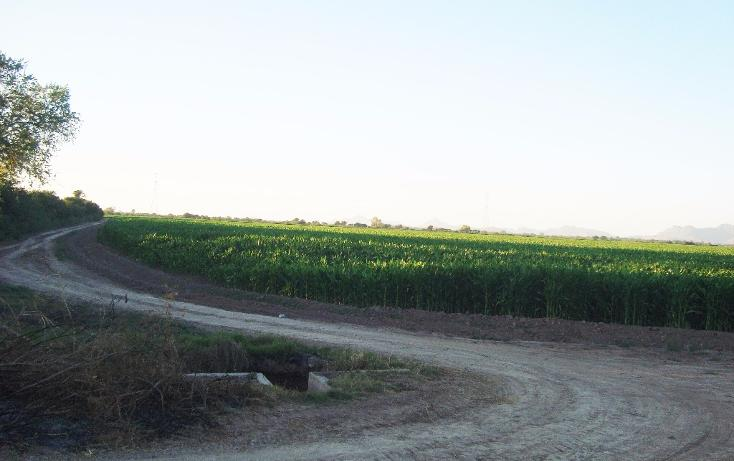 Foto de terreno habitacional en venta en  , bajada de san miguel, ahome, sinaloa, 1768483 No. 17