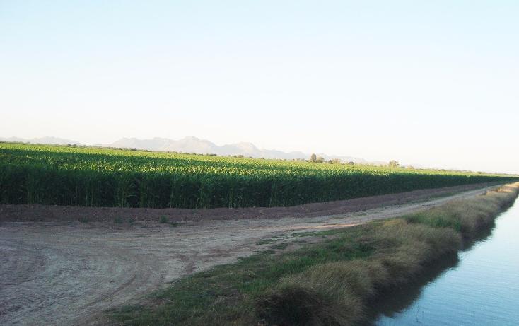 Foto de terreno habitacional en venta en  , bajada de san miguel, ahome, sinaloa, 1768483 No. 18