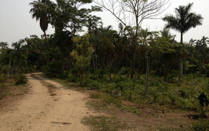Foto de terreno habitacional en venta en  , cayaco, acapulco de juárez, guerrero, 1270901 No. 03