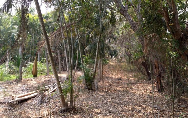 Foto de terreno habitacional en venta en  , cayaco, acapulco de juárez, guerrero, 1270901 No. 06
