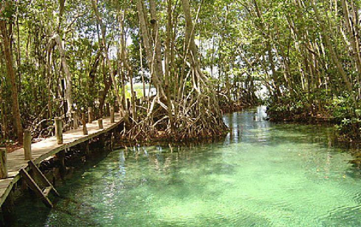 Foto de terreno comercial en venta en, celestun, celestún, yucatán, 1059545 no 08