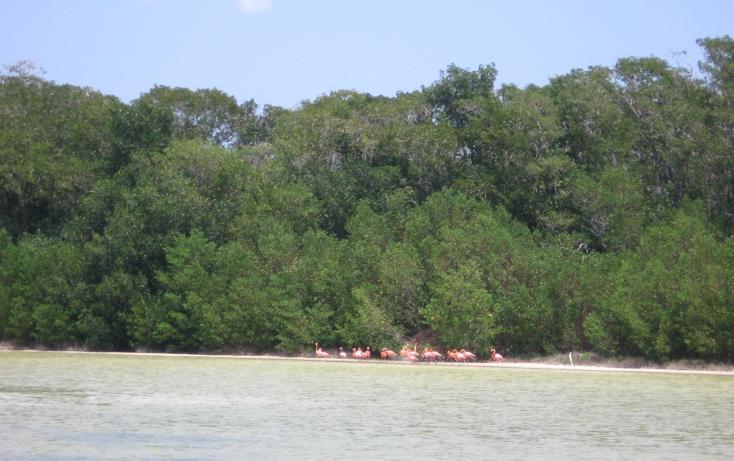 Foto de terreno comercial en venta en  , celestun, celestún, yucatán, 1059545 No. 12