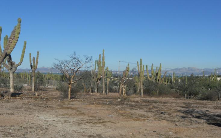Foto de terreno habitacional en venta en  , centenario, la paz, baja california sur, 1208235 No. 05