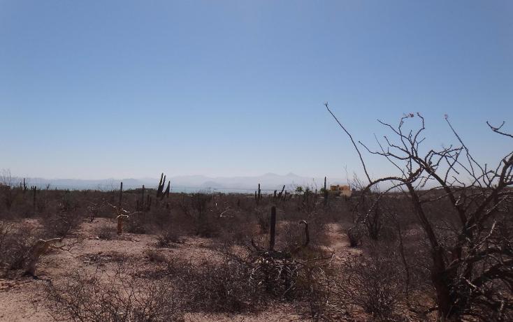Foto de terreno comercial en venta en  , centenario, la paz, baja california sur, 2003164 No. 03