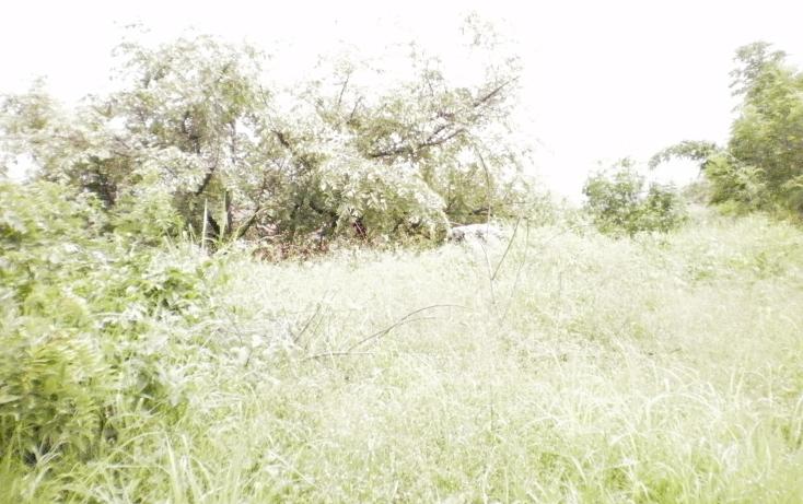 Foto de terreno comercial en venta en  , centro, cuautla, morelos, 1080369 No. 03