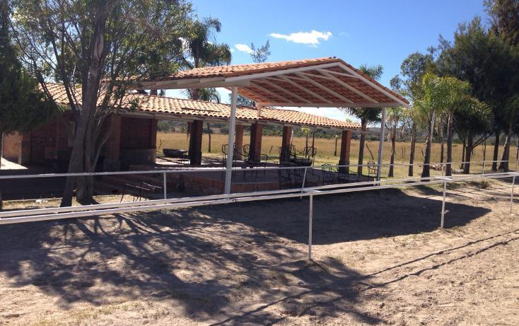 Foto de rancho en venta en  , cerca blanca, yahualica de gonzález gallo, jalisco, 1181949 No. 14