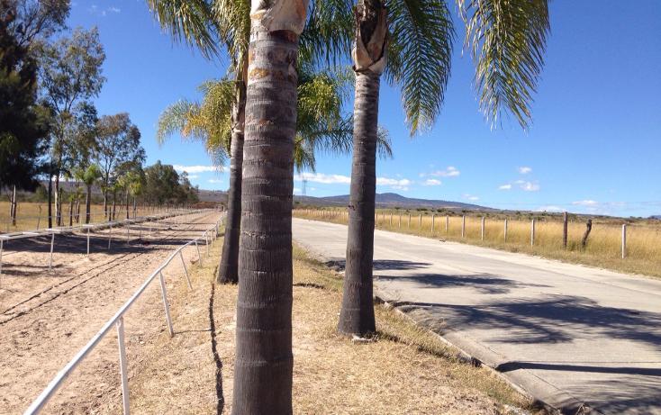 Foto de rancho en venta en  , cerca blanca, yahualica de gonzález gallo, jalisco, 1181949 No. 20