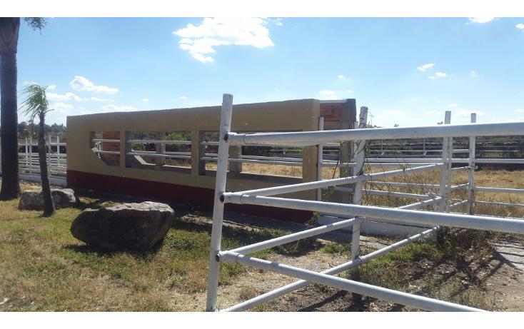 Foto de rancho en venta en  , cerca blanca, yahualica de gonzález gallo, jalisco, 1181949 No. 37