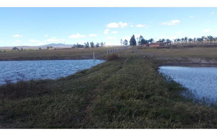 Foto de rancho en venta en  , cerca blanca, yahualica de gonzález gallo, jalisco, 1181949 No. 43
