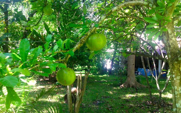 Foto de local en renta en  , cerro gordo, actopan, veracruz de ignacio de la llave, 1445527 No. 22