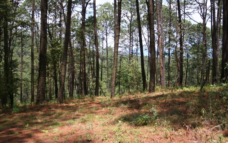 Foto de terreno habitacional en venta en  , cerro gordo, valle de bravo, méxico, 869479 No. 01