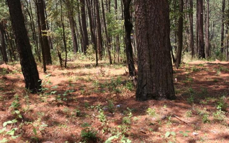 Foto de terreno habitacional en venta en  , cerro gordo, valle de bravo, méxico, 869479 No. 05