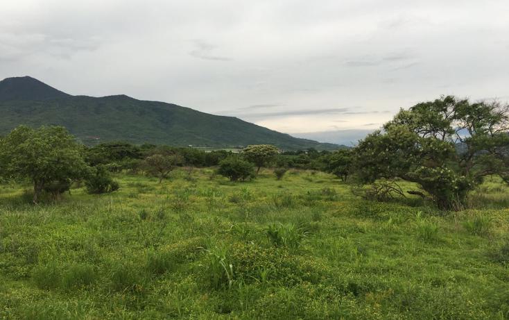 Foto de terreno comercial en venta en  , chaparaco, zamora, michoacán de ocampo, 1289723 No. 06
