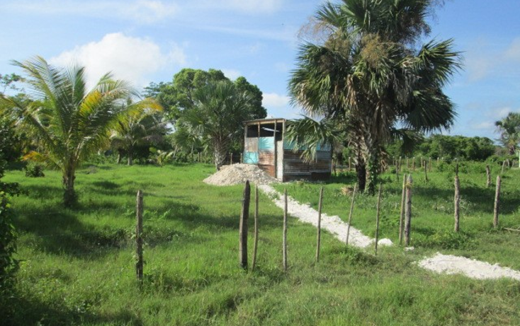 Foto de terreno habitacional en venta en  , chekubul, carmen, campeche, 1135349 No. 02
