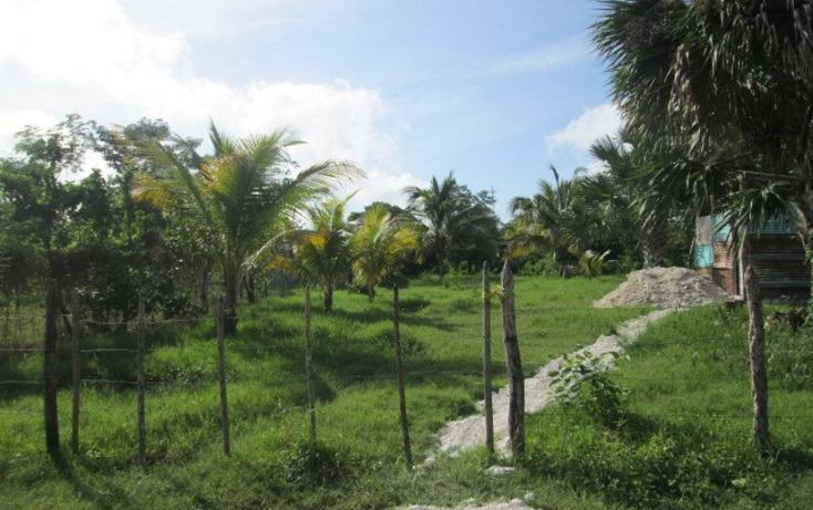 Foto de terreno habitacional en venta en  , chekubul, carmen, campeche, 1135349 No. 03