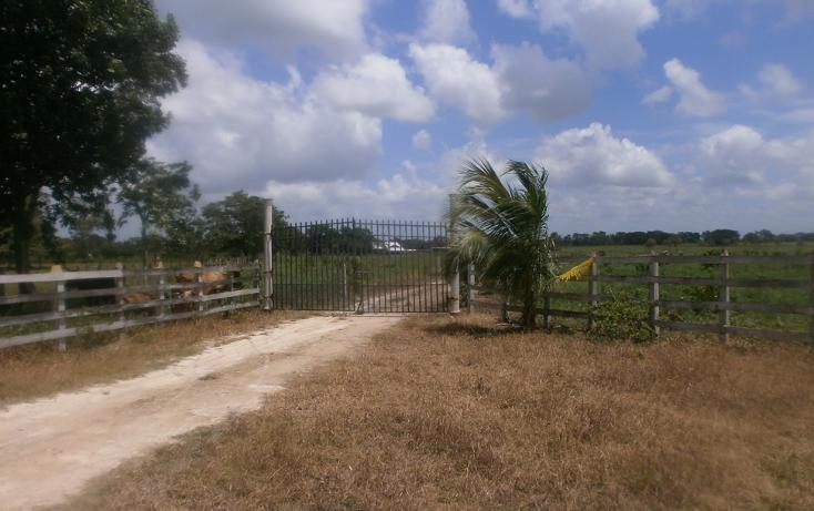 Foto de terreno habitacional en venta en  , chekubul, carmen, campeche, 1315891 No. 04