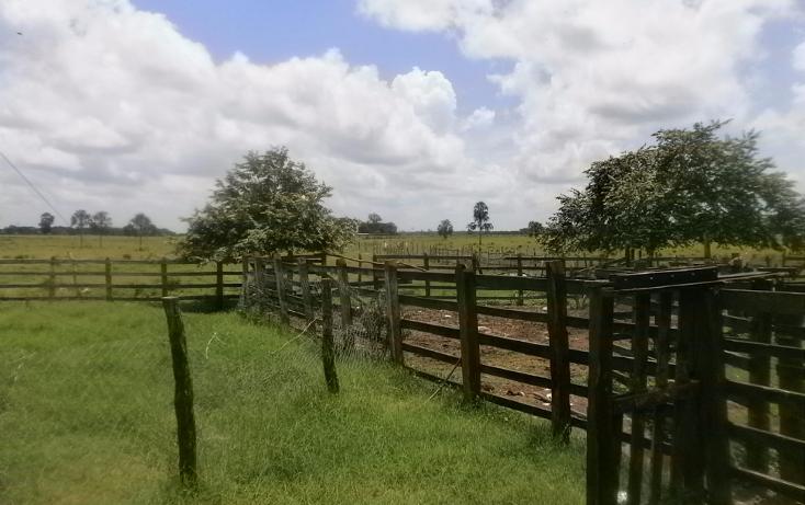 Foto de terreno habitacional en venta en  , chekubul, carmen, campeche, 1315891 No. 05