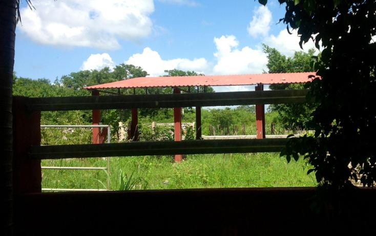 Foto de rancho en venta en  , chicxulub, chicxulub pueblo, yucatán, 1072615 No. 03