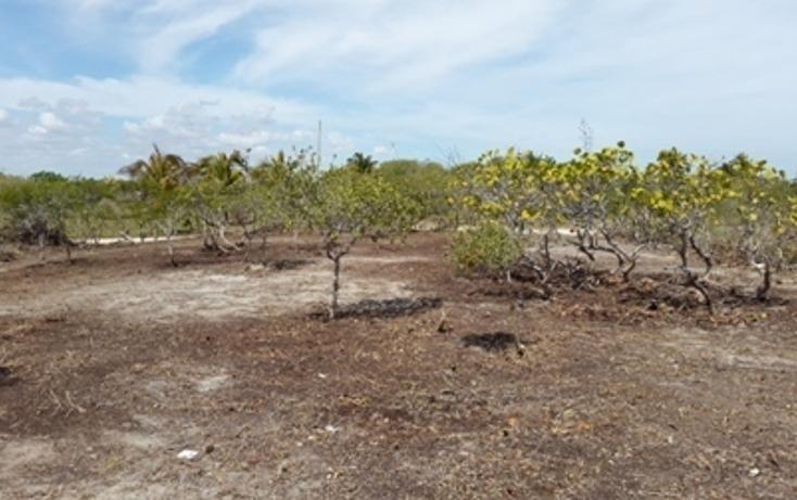 Foto de terreno habitacional en venta en, chicxulub puerto, progreso, yucatán, 937791 no 12