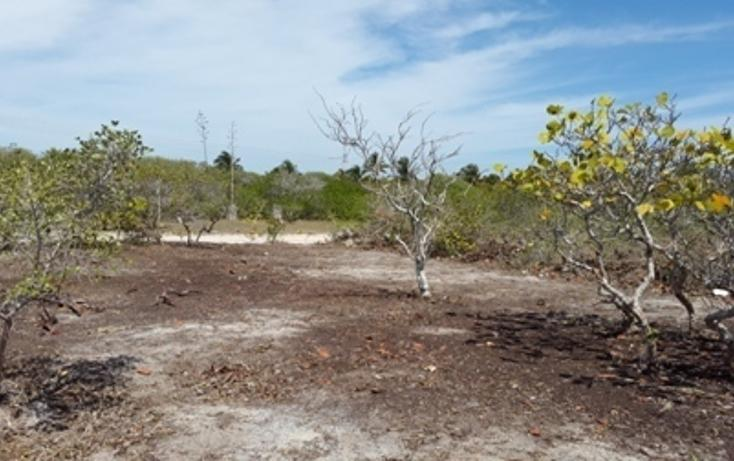 Foto de terreno habitacional en venta en, chicxulub puerto, progreso, yucatán, 937791 no 16