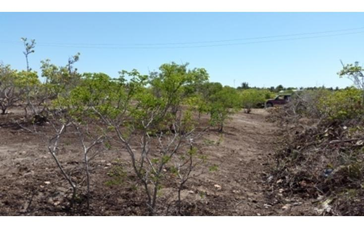 Foto de terreno habitacional en venta en  , chicxulub puerto, progreso, yucatán, 937791 No. 24