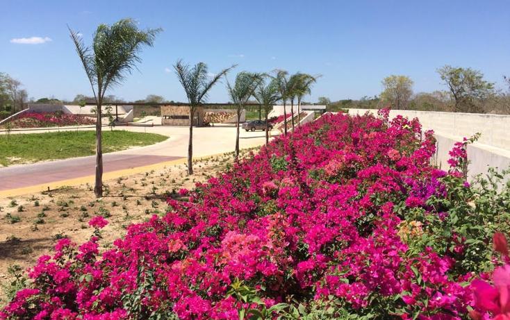 Foto de terreno habitacional en venta en  , cholul, mérida, yucatán, 1040657 No. 04