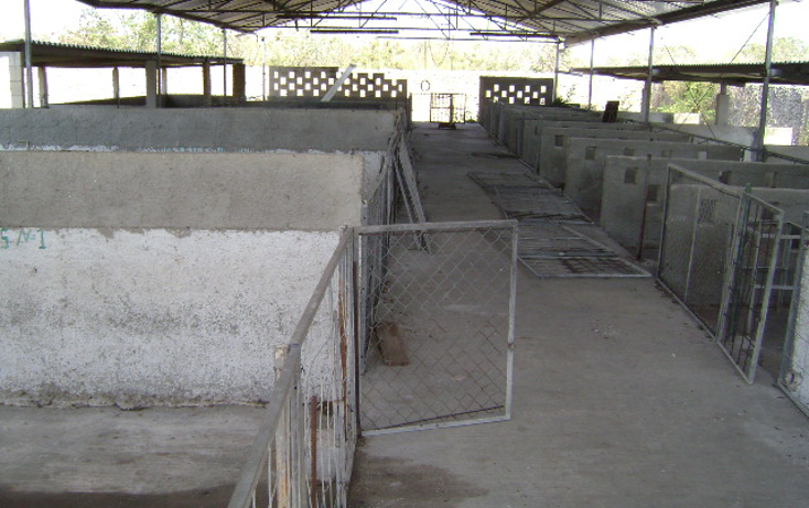 Foto de terreno habitacional en venta en  , cholul, m?rida, yucat?n, 1062977 No. 08