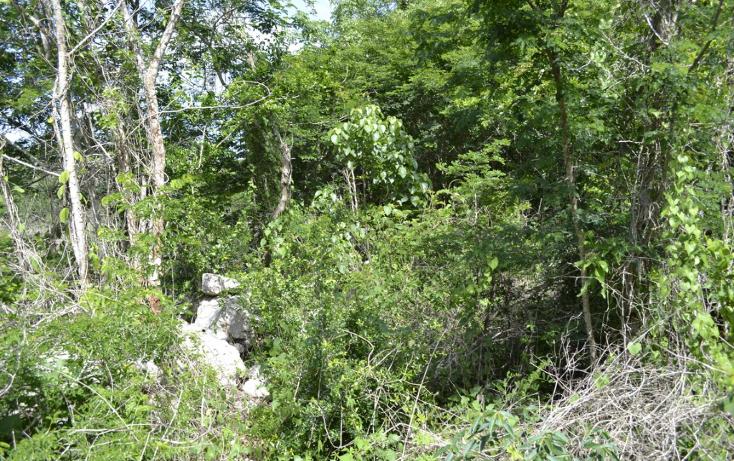 Foto de terreno habitacional en venta en  , cholul, m?rida, yucat?n, 1459361 No. 05