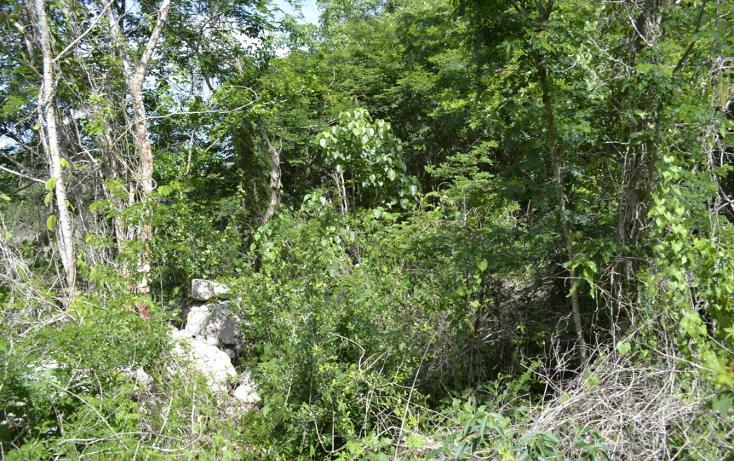 Foto de terreno habitacional en venta en  , cholul, m?rida, yucat?n, 1459361 No. 06