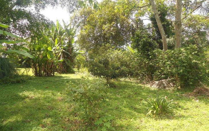 Foto de terreno habitacional en venta en  , coatepec centro, coatepec, veracruz de ignacio de la llave, 1295165 No. 10