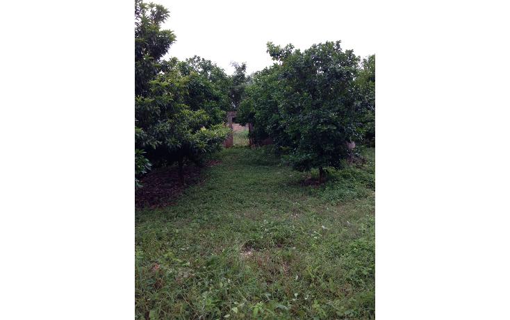 Foto de rancho en venta en  , conkal, conkal, yucatán, 1113373 No. 07
