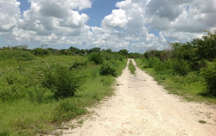 Foto de terreno habitacional en venta en  , conkal, conkal, yucatán, 1128349 No. 06