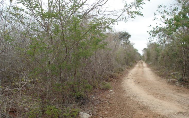 Foto de terreno habitacional en venta en  , conkal, conkal, yucat?n, 1266219 No. 01