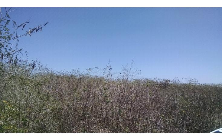 Foto de terreno habitacional en venta en  , conkal, conkal, yucatán, 1284385 No. 03